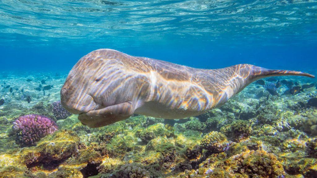Dolphin Hause Marsa alam