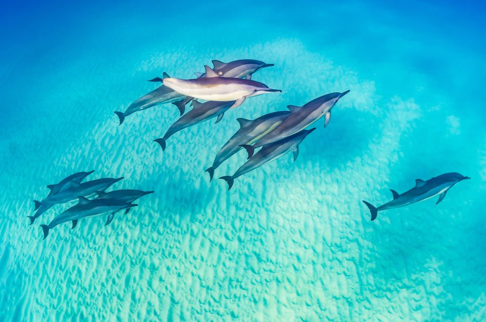 Dolphins in Marsa alam