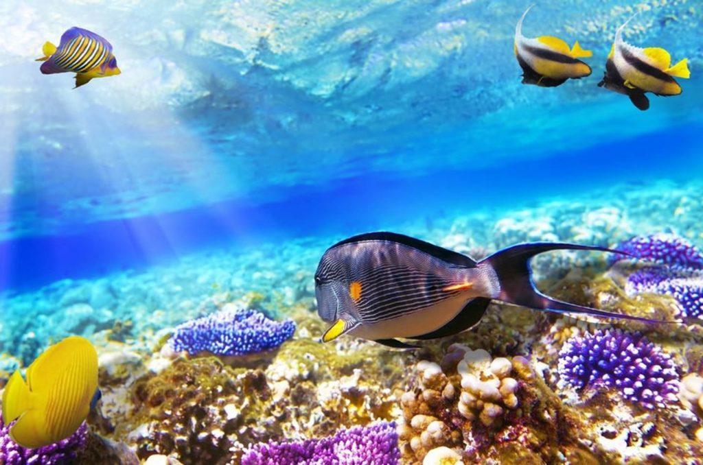 Snorkeling in Hurghada