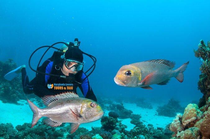 Wreck Diving Hurghada