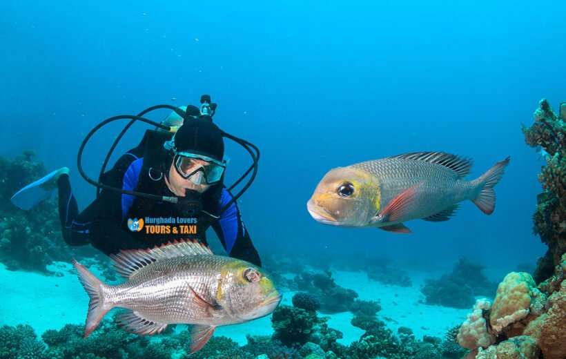 HURGHADA: WRECK DIVING EXPERIENCE WITH LUNCH