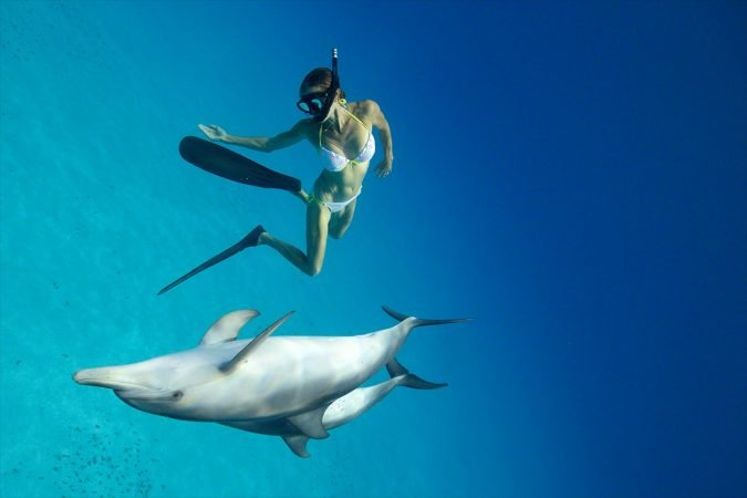 Hurghada: Dolphin House Snorkeling day Tour with lunch and Drinks