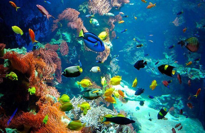 Giftun Island Trip