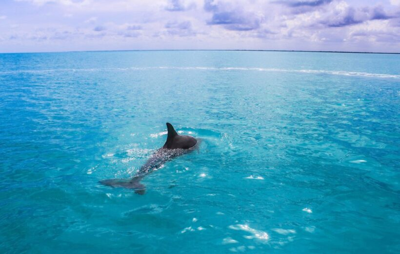 HURGHADA: SPEEDBOAT DOLPHIN WATCHING AND SNORKELING