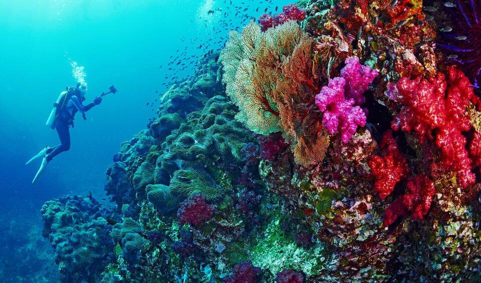 El Gouna Diving Tour