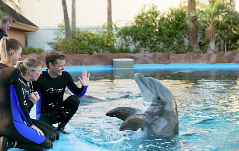 Watch Dolphin World Show or Swim With Dolphins Tickets and Transfers