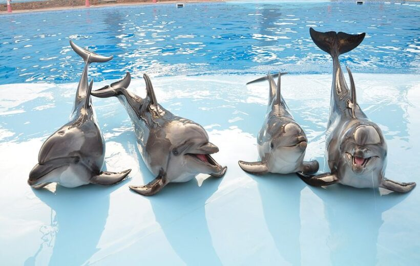 Soma Bay: 2 in 1 Trip Dolphin World Show and Mini Egypt Park with Transfers