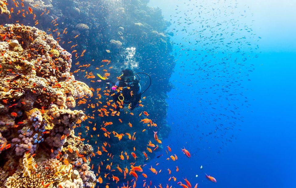Diving tour in sharm el sheikh