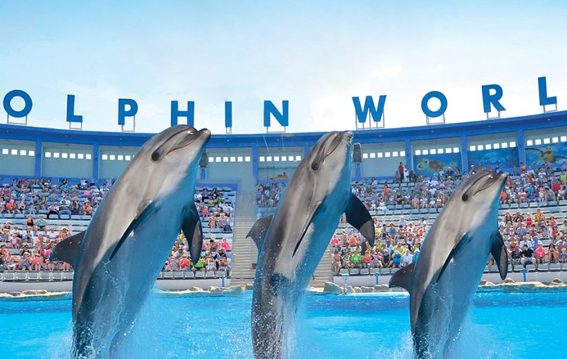El Gouna: Dolphin World Show or Swimming With Dolphins Tickets and Transfers