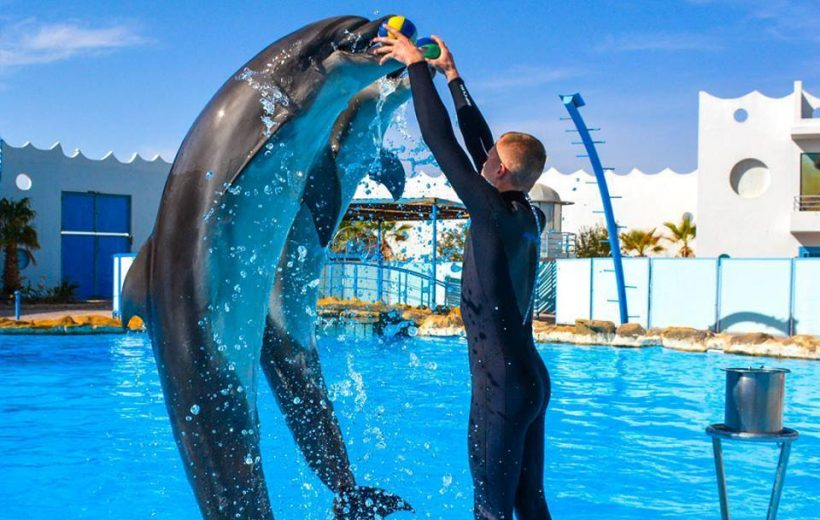 Hurghada: 2 in 1 Trip Dolphin World Show and Mini Egypt Park with Transfers