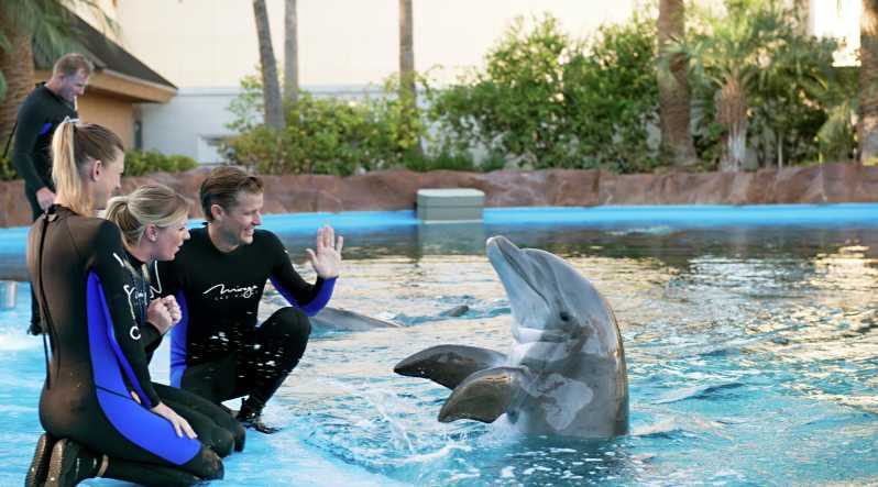 Dolphin Show in Hurghada
