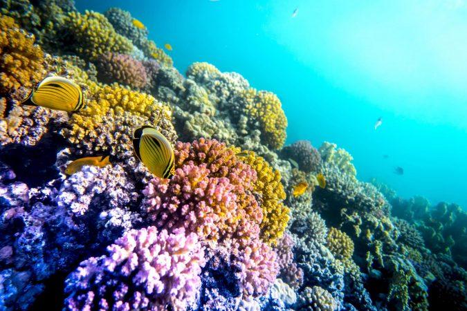 El Gouna Snorkeling