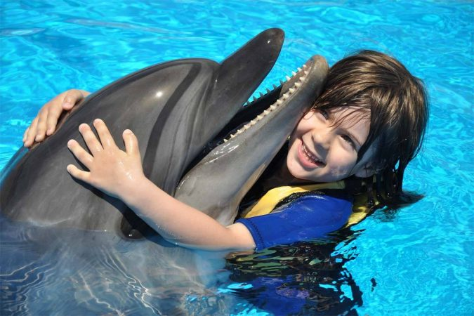 Dolphin Show