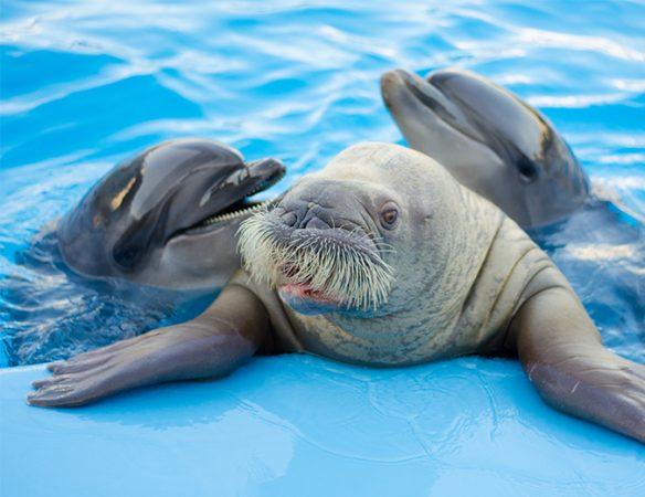 Hurghada Dolphin World