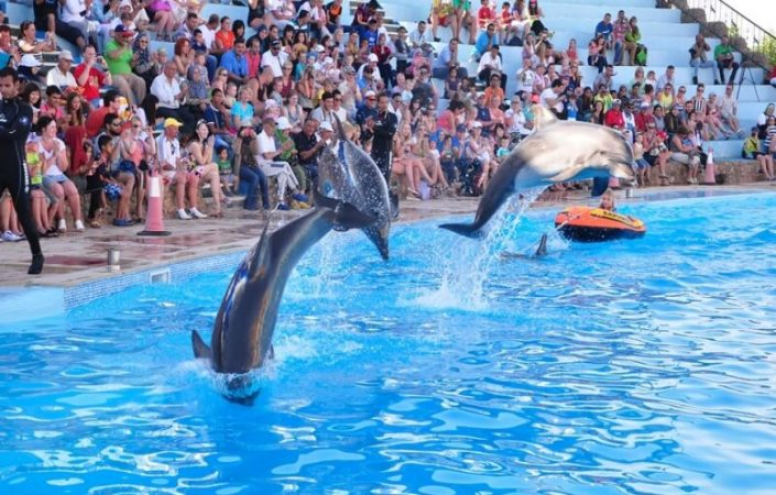 hurghada dolphin
