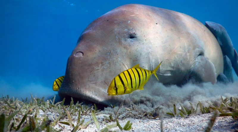 Marsa Alam Snorkeling Trip with Dugong and Turtles (6)