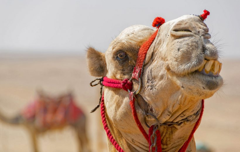 Hurghada: Super Safari Tour with Jeep, ATVs, Bedouin Village and BBQ Dinner