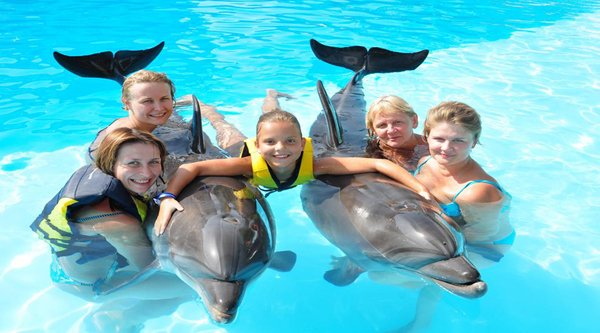 Swimming with Dolphin in Hurghada