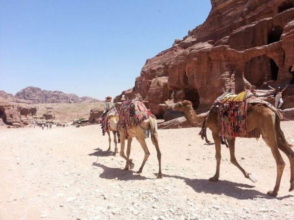 Hurghada Camel Ride Tour