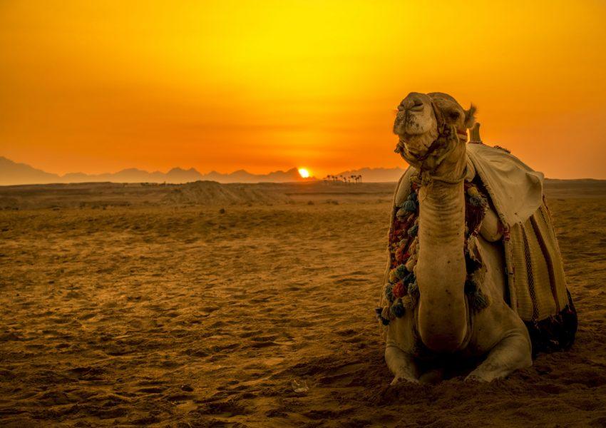 El Gouna: Buggy Safari with Bedouin Village