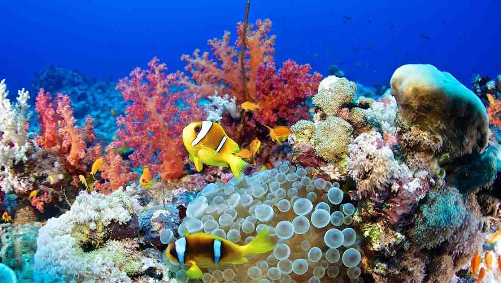 Amazing Facts about the Red Sea