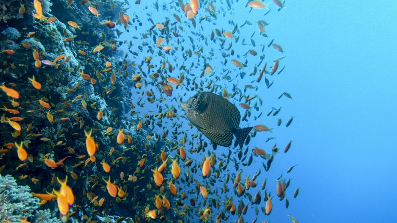 Snorkeling Giftun Island