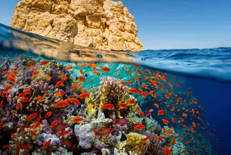 Hurghada: Super Snorkeling Tour on Luxury Boat with Lunch and Drinks