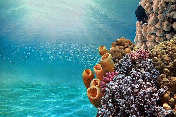 Makadi Bay: Utopia Island Snorkeling Trip with Lunch