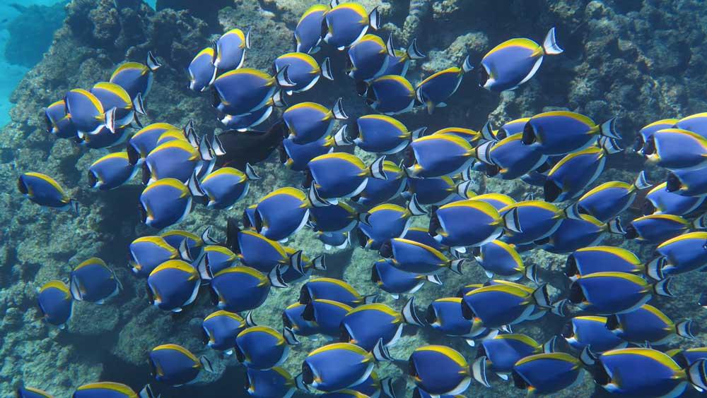 Diving Tour Abu Ramada