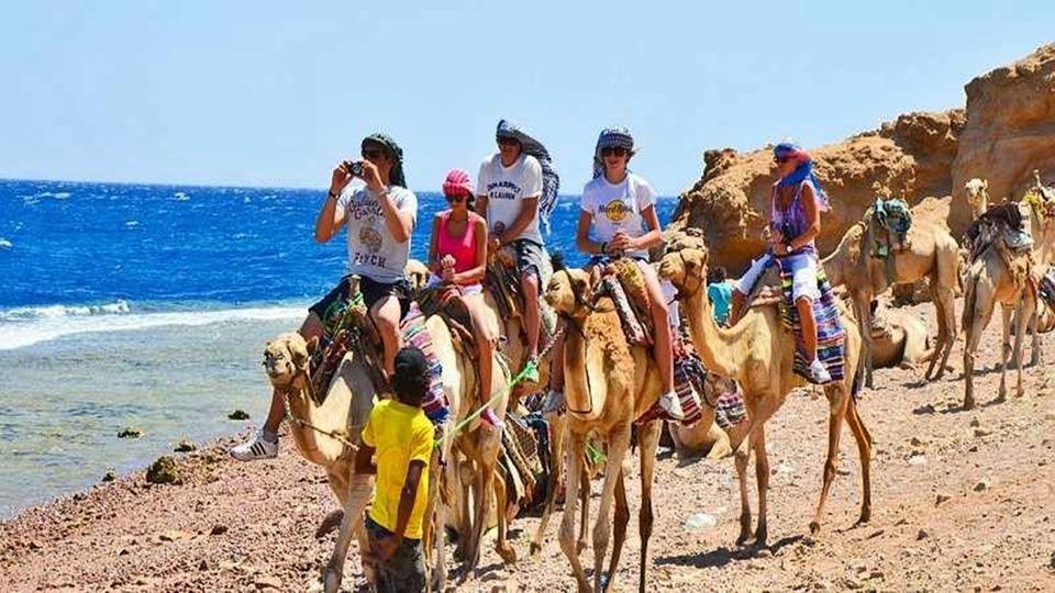 Ride on a Camel In Dahab