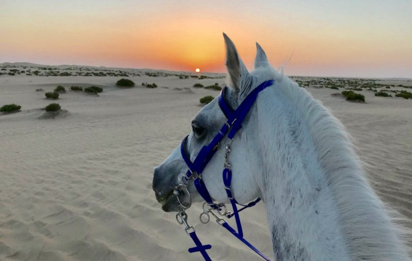 Makadi Bay: Horse Riding Private 2 Hours with Guide