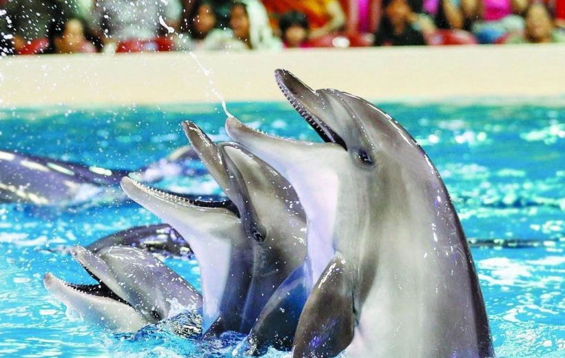 El Gouna: 2 in 1 Trip Dolphin World Show and Mini Egypt Park with Transfers