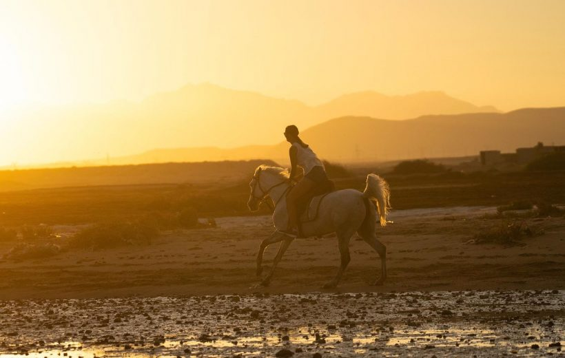 El Gouna: Horse Riding Private 2 Hours with Guide