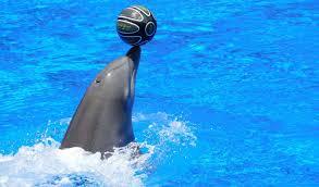 Dolphin World Show