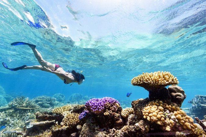 Utopia Island Snorkeling