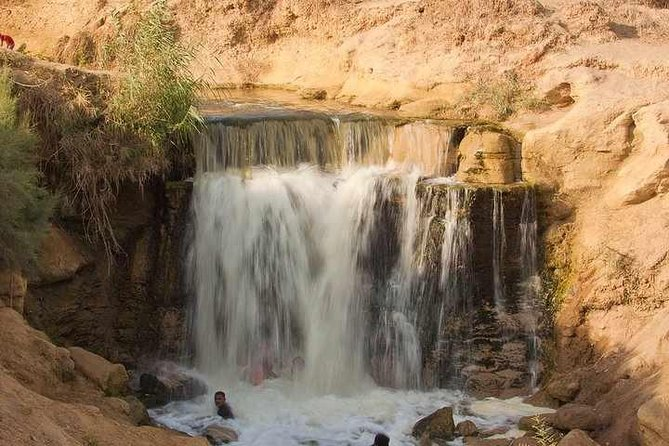 From Cairo: Valley of Whales and Wadi El Rayan Water Falls Day Tour