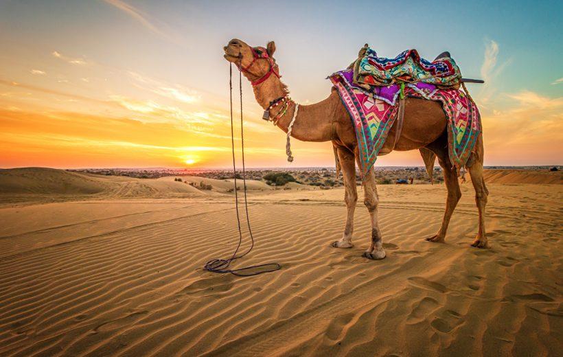 Sharm el Sheikh: Camel Ride & Bedouin Tea