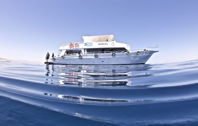 Sharm El Sheikh: Egyptian Maldives - Diving and Snorkeling in Ras Mohammed + White Island