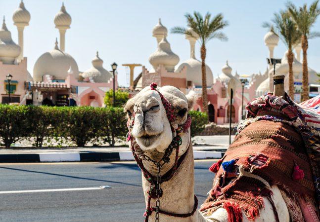 Sharm El Sheikh: City tour