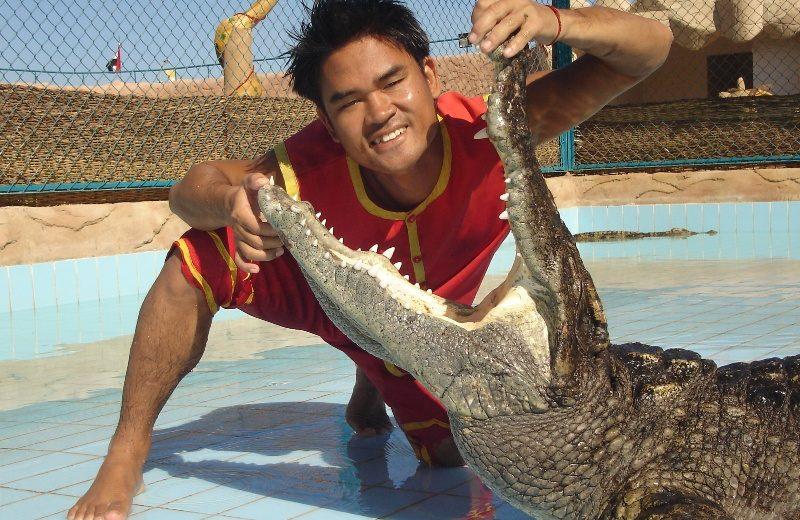 Sharm El Sheikh: Crocodile Show