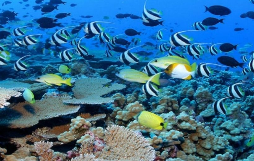 Sharm El Sheikh: Tiran Island - Full-Day Boat Snorkeling Tour with Lunch