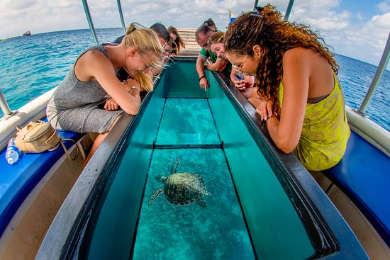 Sharm el Sheikh: Glass Bottom Boat Trip